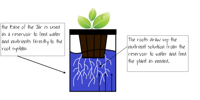The Grow Jar works on a simple passive hydroponic system.