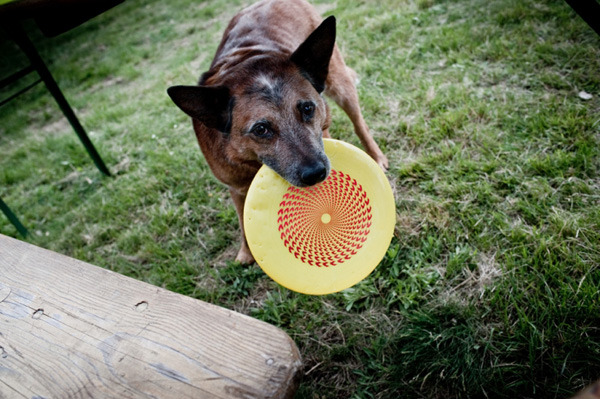 EK disc great for dogs and humans!