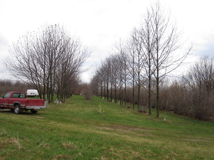 "Badgersett ""woody agriculture"" aims to replace corn and soybeans with resprouting chestnuts and hazels."