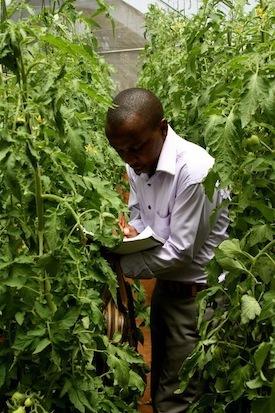 "Tom Mwangi, co-founder and chairmen ""The potato guy"""