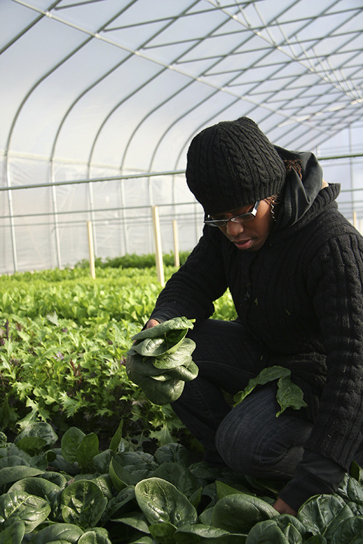 Allencia harvesting spinach at Growing Home, photo by Alan Yu