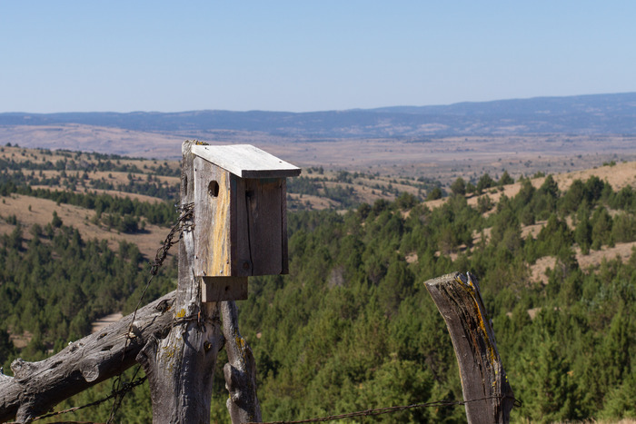 A Bluebird nest box in the Owyhee Mountains of southwest Idaho.