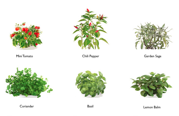 Selection of refills available for the Smart Herb Garden