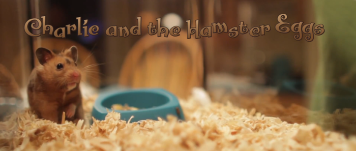 Charlie and the Hamster Eggs
