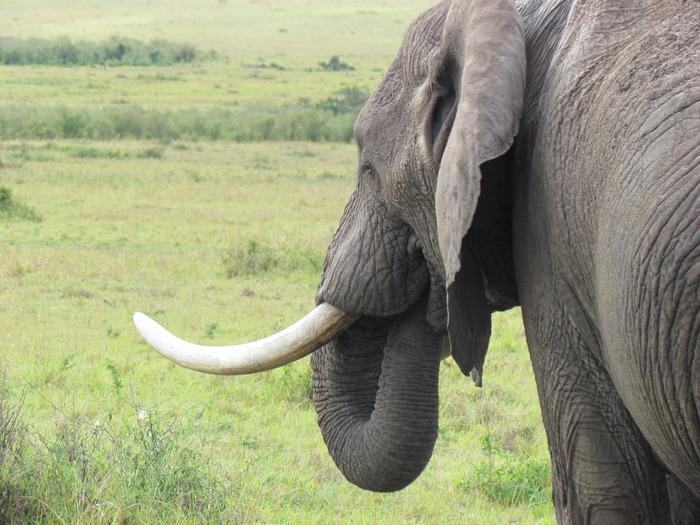 http://www.supremesafarisafrica.com/kenya-tanzania-safari.html