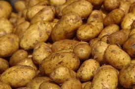 Potatoes, potatoes, potatoes!