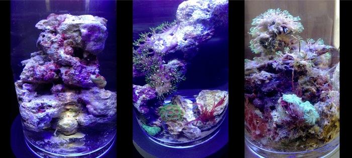 New PJ reef, 6-7 month old PJ reef, 1 1/2 year old PJ reef Ecosystem