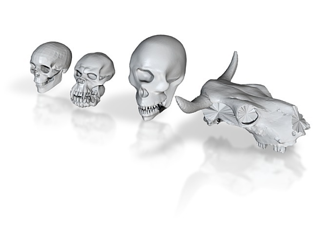 The four types of skulls available