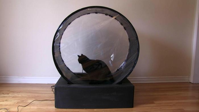 laufband für katzen