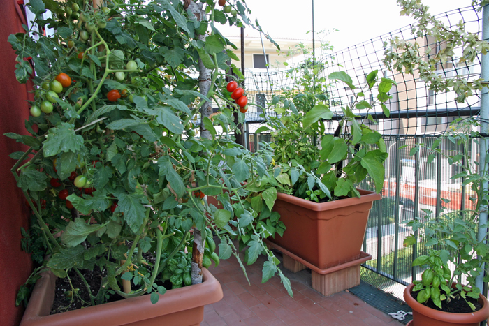 Our garden will demonstrate how to grow vegetables and herbs in small urban spaces, like balconies and window boxes.