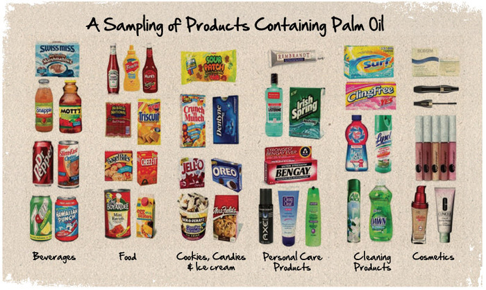 palm oil essays - sustainability of palm oil production in indonesia palm oil is the leading edible vegetable oil by production volume it is an essential ingredient in the manufacture of a wide variety of products that are used globally every day, such as chocolate, soap, and cosmetics.