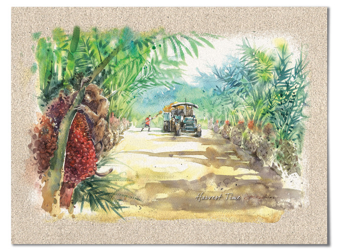 """Harvest Time"" – Oil Palm Trees produce on average more than 200 kg of fruit per tree a year."