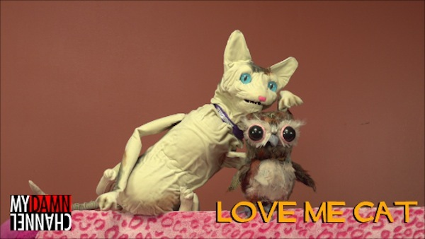 Love Me Cat & Owly