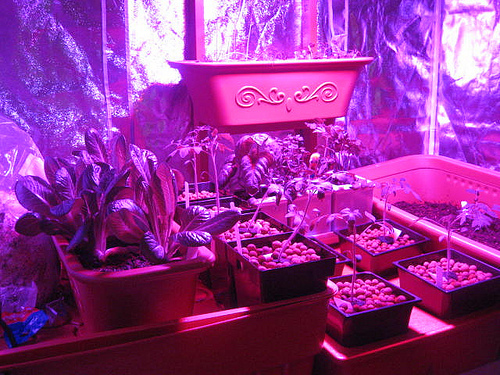 Apartment Plants Under Growlight