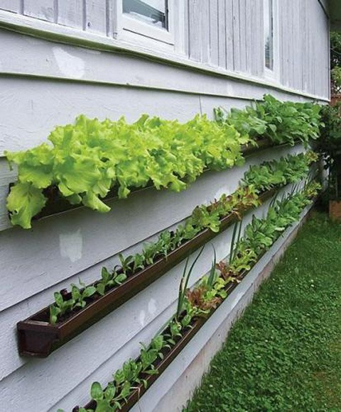 Vertical Garden on the side of house
