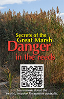 QR Coded Signs posted around The Great Marsh will point to the informative videos.