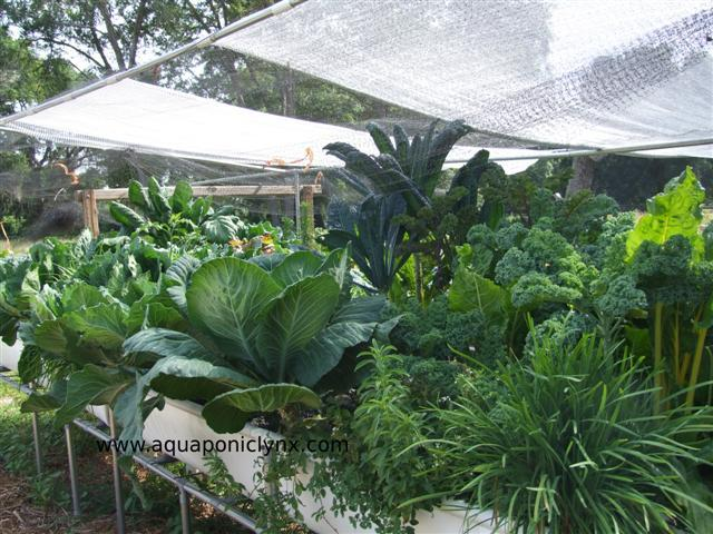For backyard growing I think Media beds are generally the way to go. I explain why in the book.