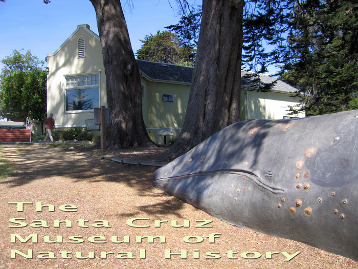 The Santa Cruz Museum of Natural History is a leading wildlife educator.