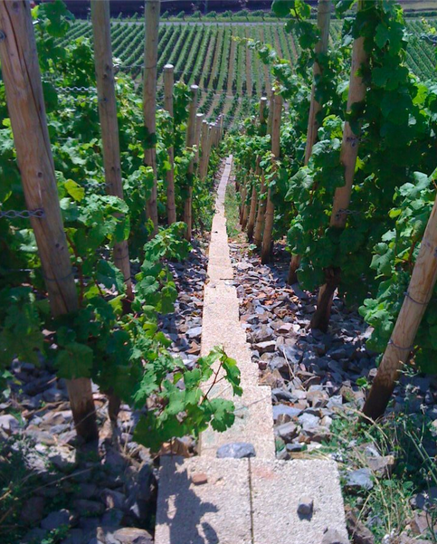 The little staircase in the steep Erdener Treppchen vineyard