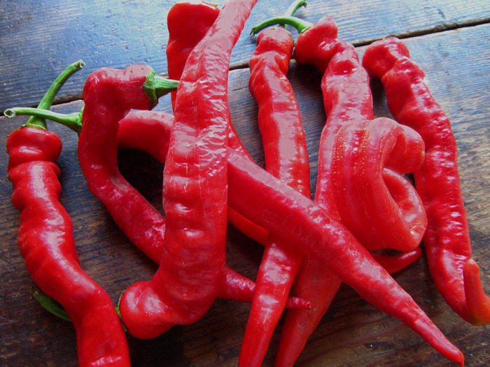The Hot Winter Pepper