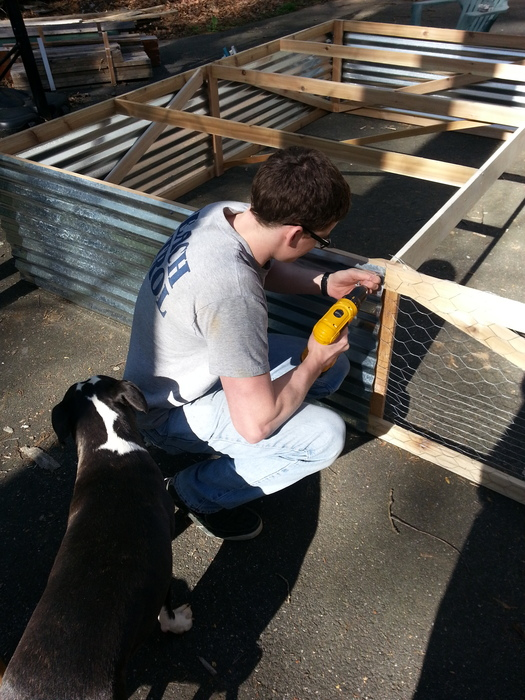 My brother Robbie (who produced our Kickstarter video) fastens aluminum roofing to the side of a chicken tractor. Bebop supervises.