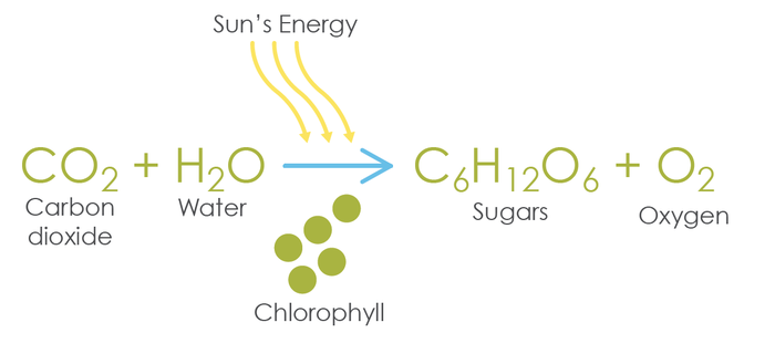 balanced chemosynthesis equation Chemosynthesis vs photosynthesis ecosystems depend upon the ability of some organisms to convert inorganic compounds into food that other organisms can then exploit in most cases, primary food production occurs in a process called photosynthesis, which is powered by sunlight in a few environments, primary.