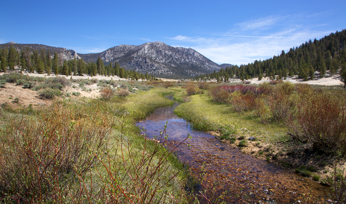Healthy Golden Trout habitat