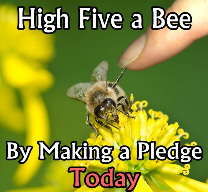 High Five a Bee By Making a Pledge Today!