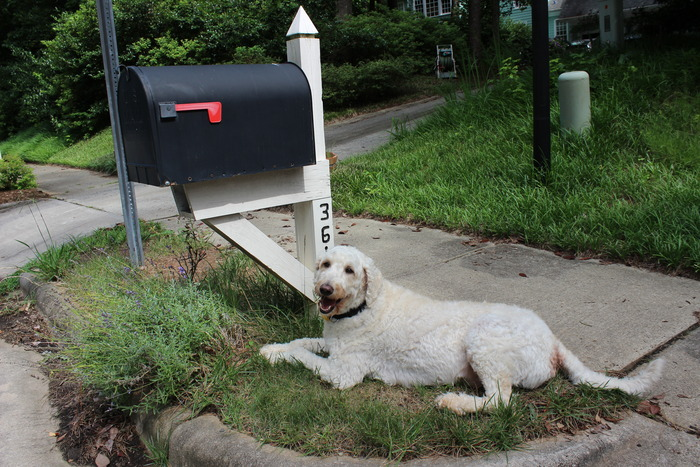 Even Todd loves getting mail!
