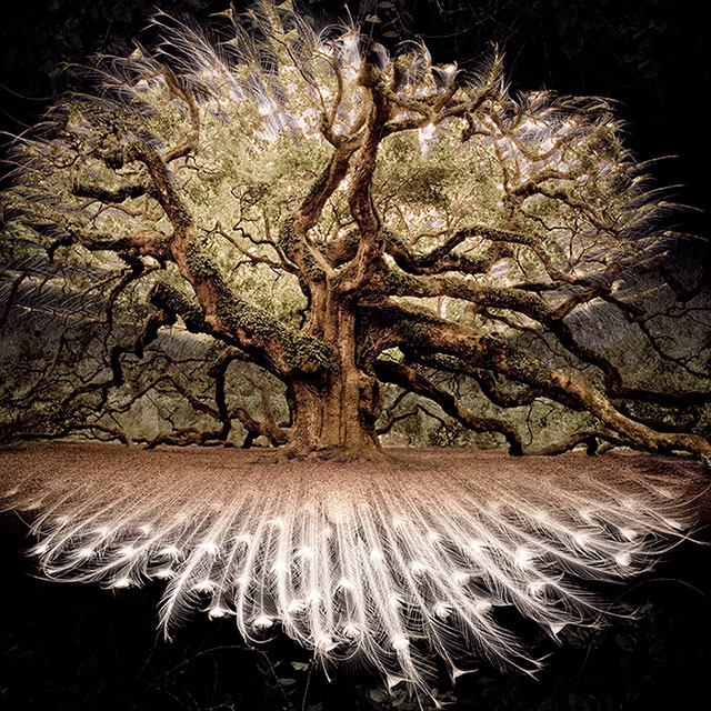 "$2,000 – ""Angel Oak"" by Elliott McDowell – photo composite, signed, framed, 28""x28"" inches + Set Visit"