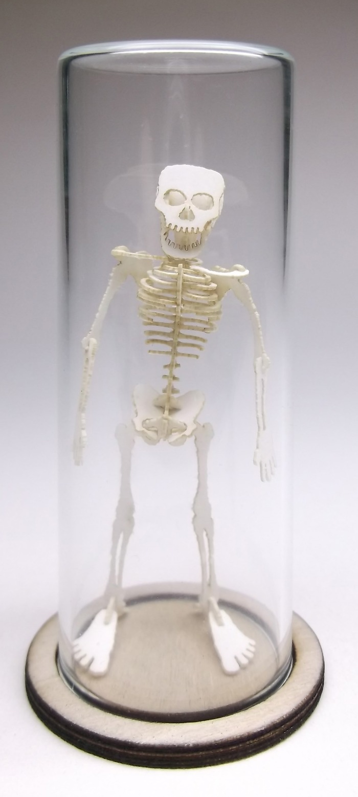 Tinysaur: The Tiny Human Skeleton