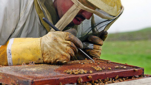 10 Million Bee Colonies have been destroyed in the past six years