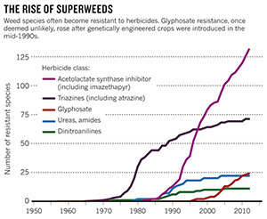 Super Weeds Explosive Growth since use of GMO's