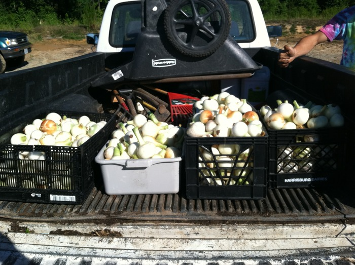 Crates of onions fresh picked and heading to the store!