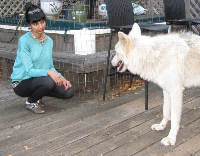 My first meeting with a real wolf - 8/2013