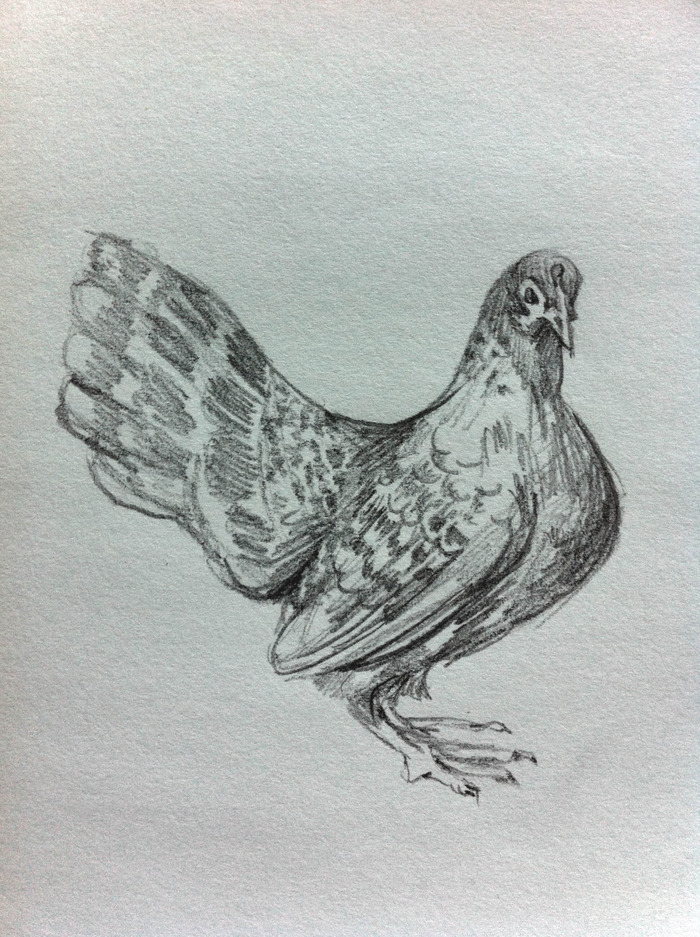 $15.00 Pledge: Graphite Drawing. (Example is a chicken portrait.)