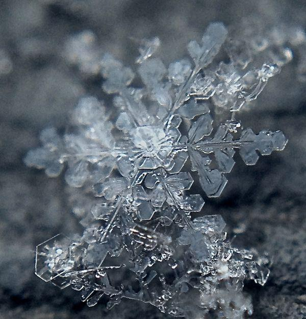 See Snowflakes Up-Close!