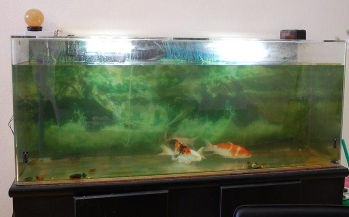 5 gallon fish tank 000 000 gallon to 10 000 gallon for 10000 gallon fish tank