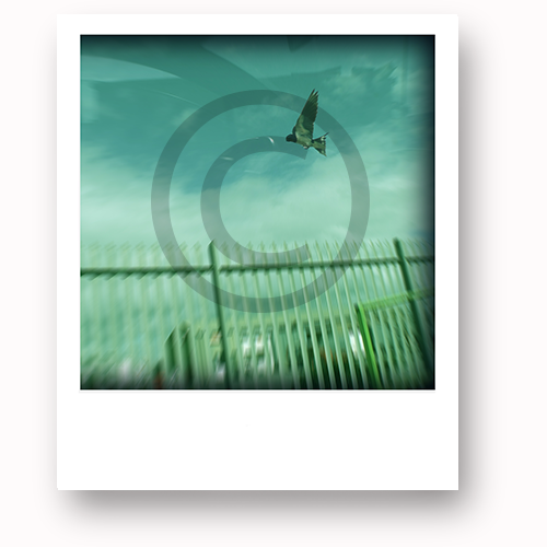 One of our rewards. Snap Happy #1 is called 'Fly.' A limited edition photo canvas by Happy
