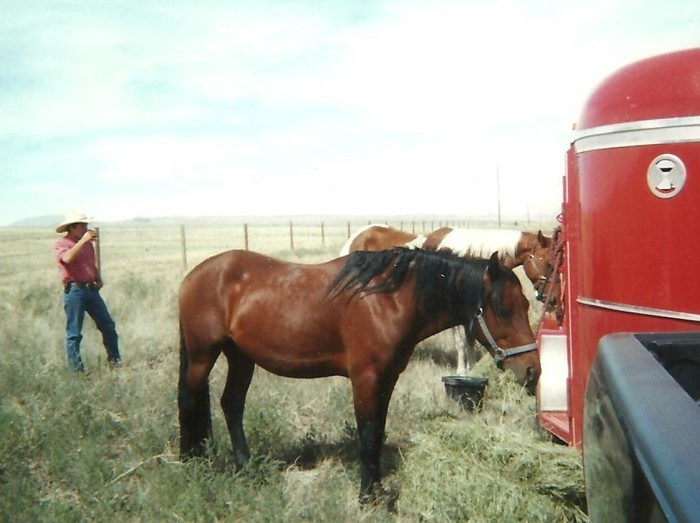 Hauling horses from Wind River Ranch to Texas