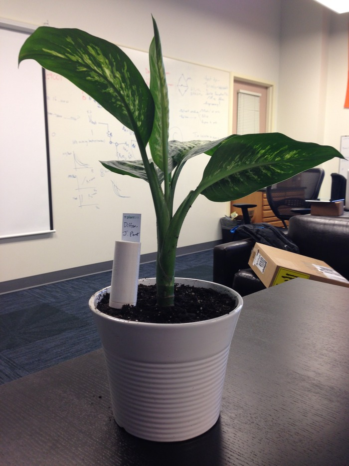 One of the test plants in our office. It's alive!