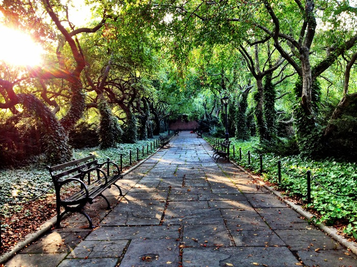 Central Park Summertime