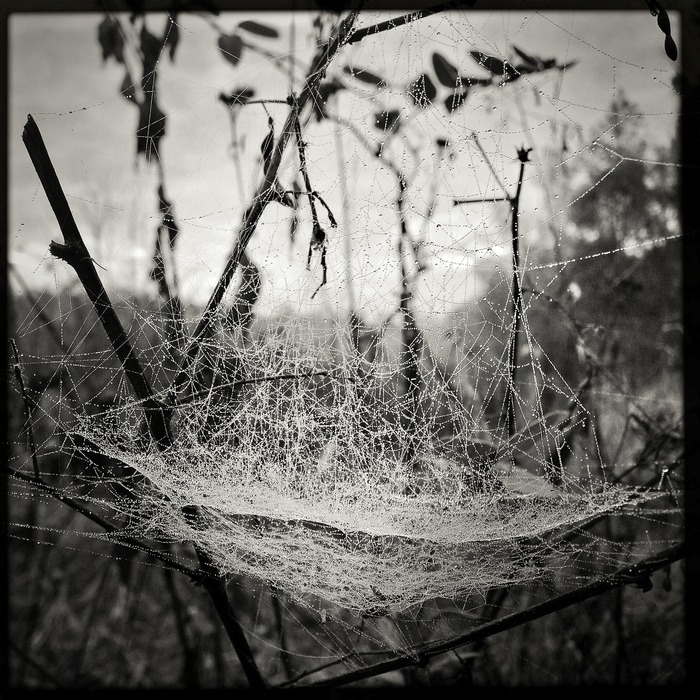 meadow web