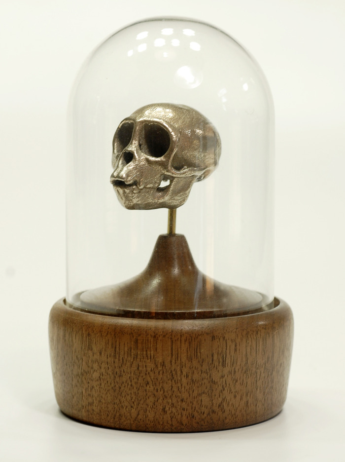 Spider Monkey Skull in Bell Jar Display with Hand-Turned Walnut Base