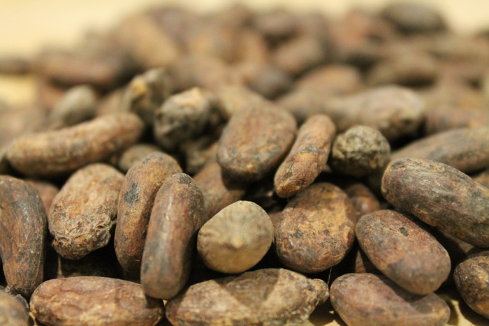 Raw cocoa beans before roasting