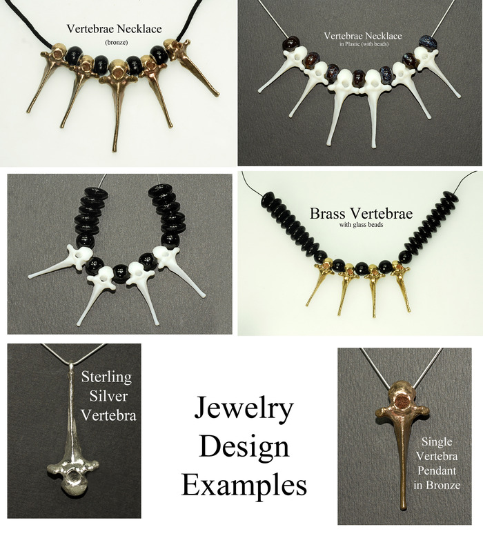 Mammal Vertebrae (Backbone) as Jewelry