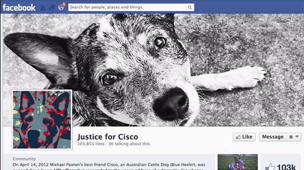 In April, 2012 Michael Paxton's dog Cisco, an Australian Cattle Dog (Blue Heeler), was shot by an APD officer that responded to the wrong address of a domestic disturbance complaint.
