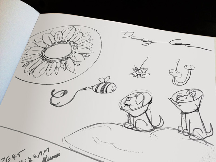 The first sketches of the Daisy Cone