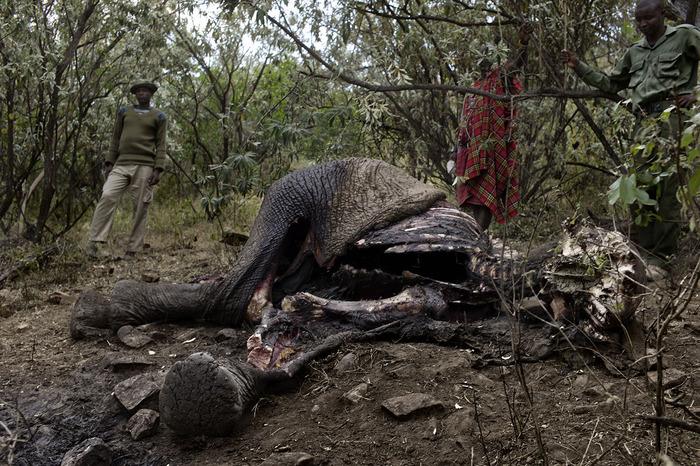 Rangers inspect an elephant carcass in the Masai Mara.