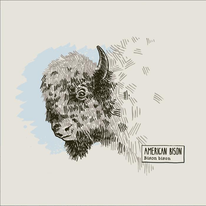 American Bison - Imagine this printed on salvaged wood!